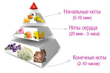 Пирамида парфюмерной композиции